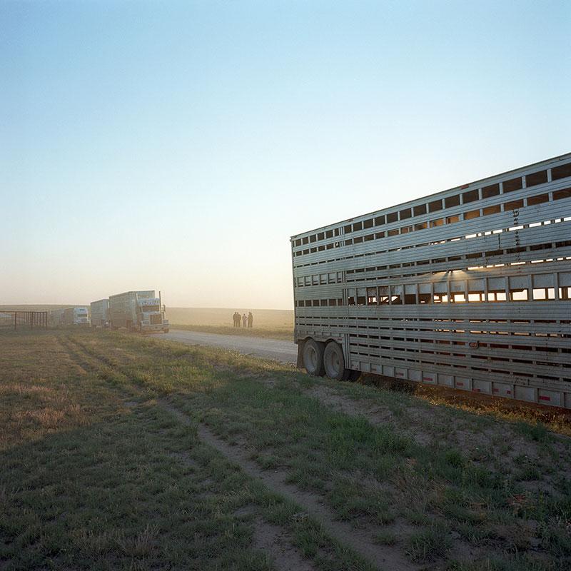 cowboys028