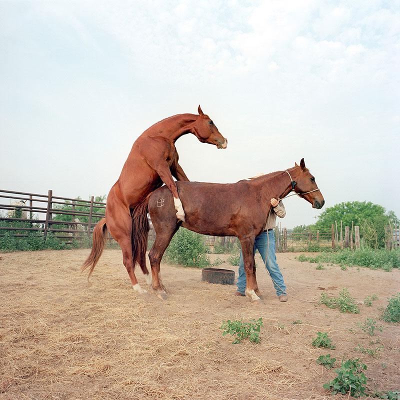 cowboys031