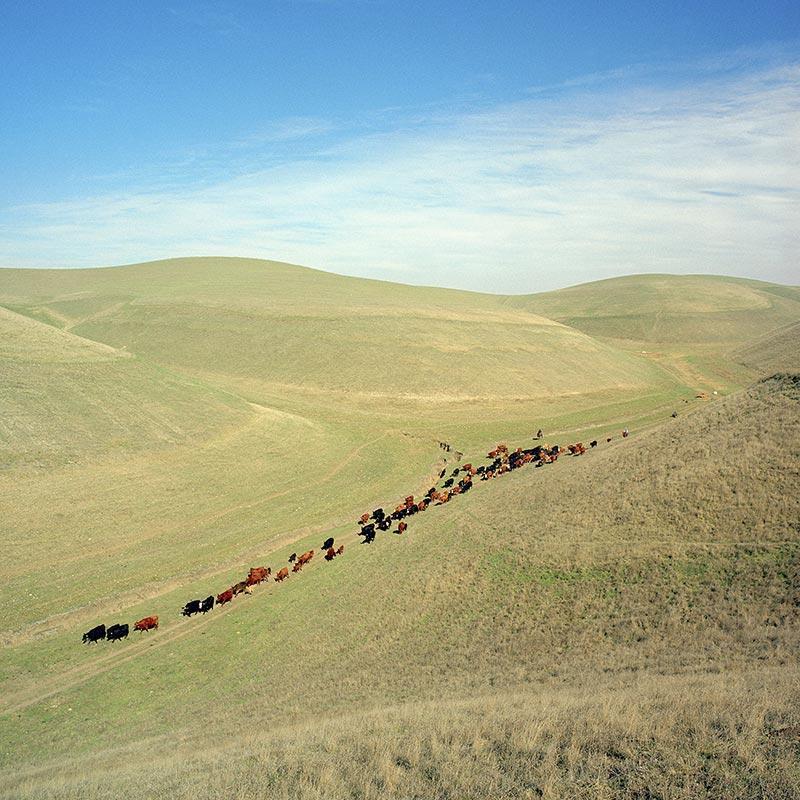 cowboys033