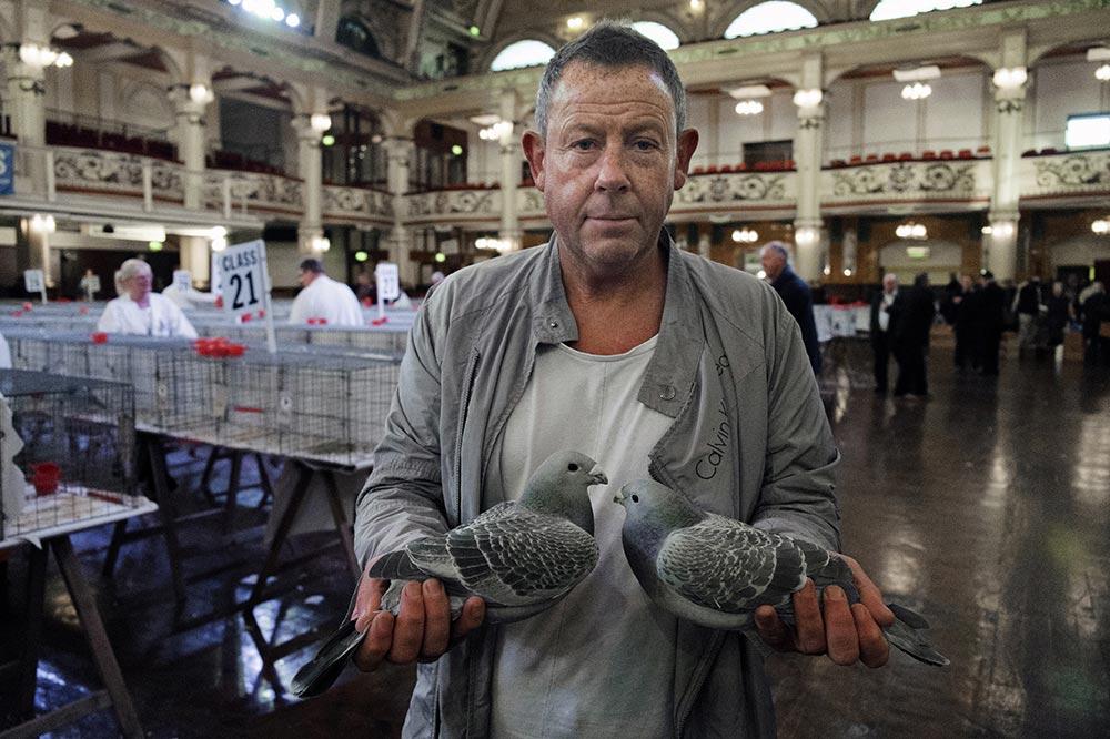 pigeons005