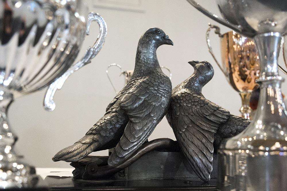 pigeons012